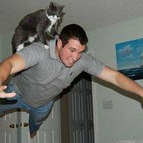 В нужный момент - кошки