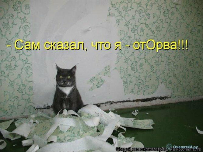 Байки из котоматрицы 10