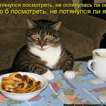 Байки из котоматрицы смешных фото приколов