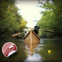 Удивительные собаки смешных фото приколов