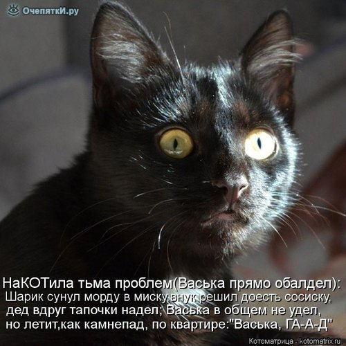 Животная котоматрица 0
