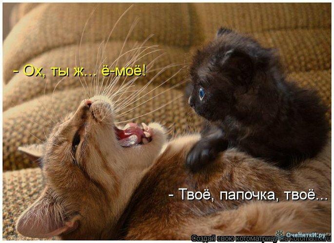 Животная котоматрица 4