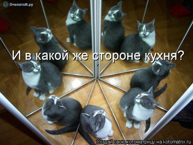 Животная котоматрица 5