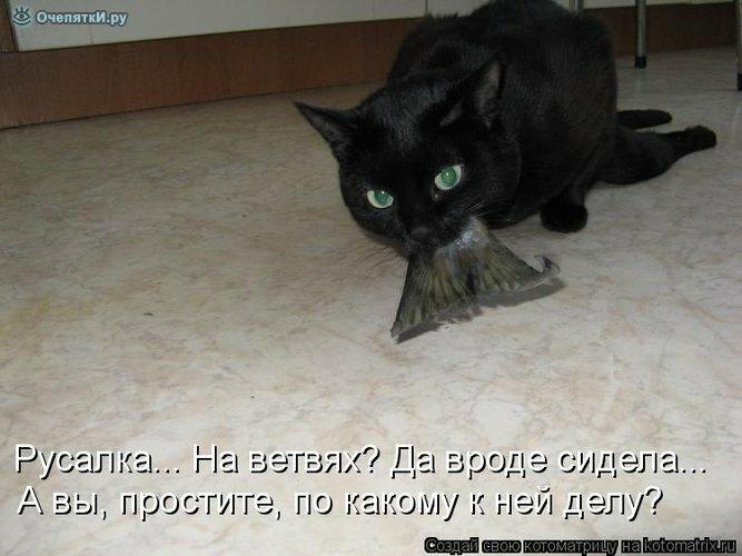 Животная котоматрица 6