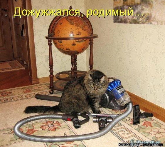 Животная котоматрица 7