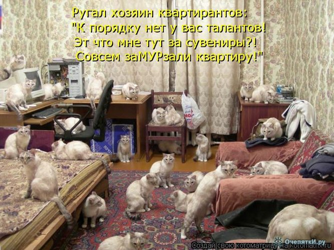 Животная котоматрица 8