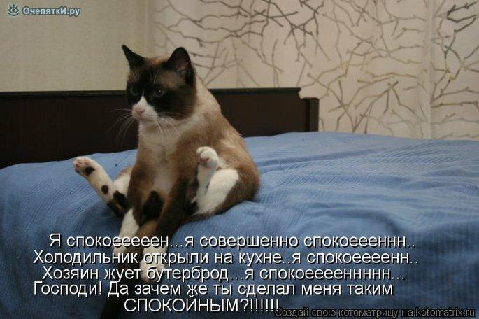 Животная котоматрица 9