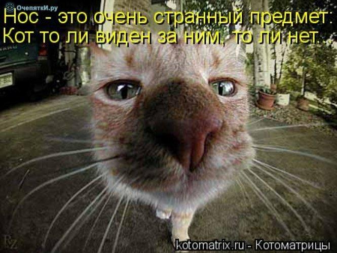 Животная котоматрица 10