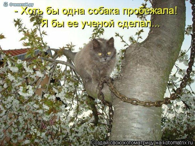 Животная котоматрица 11