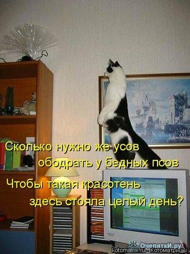 Животная котоматрица 12