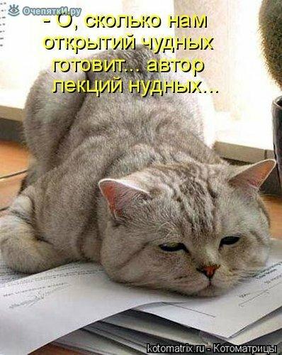 Животная котоматрица 13