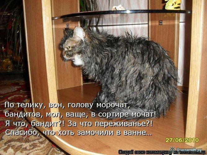 Животная котоматрица 16