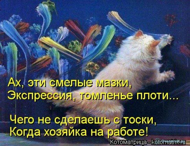 Животная котоматрица 17