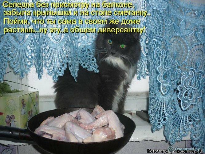 Животная котоматрица 18