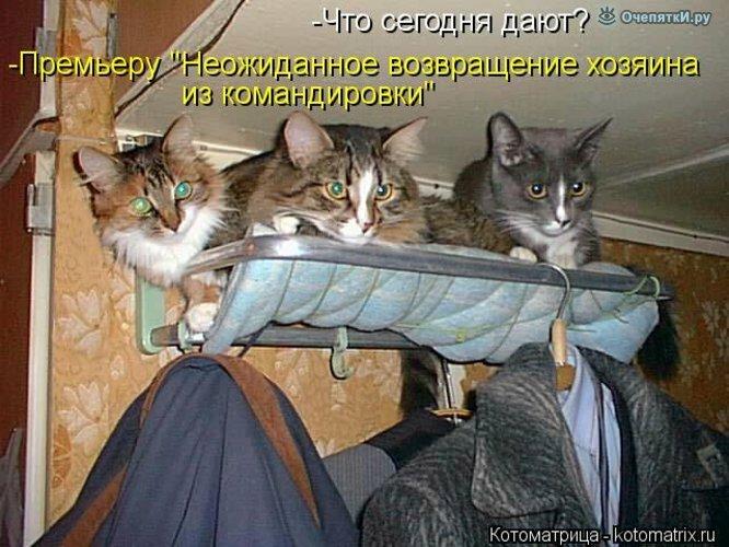 Животная котоматрица 19