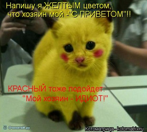 Животная котоматрица 21