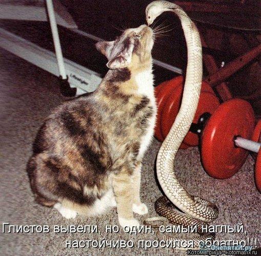 Животная котоматрица 23