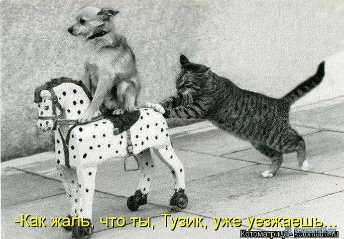 Животная котоматрица 24