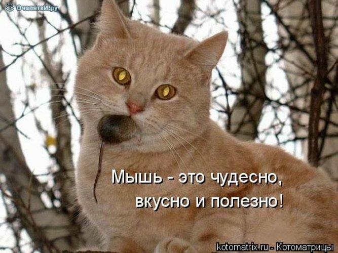 Животная котоматрица 25