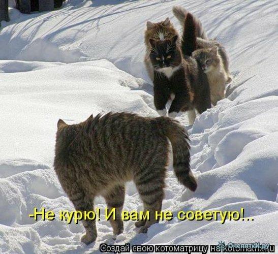 Животная котоматрица 26