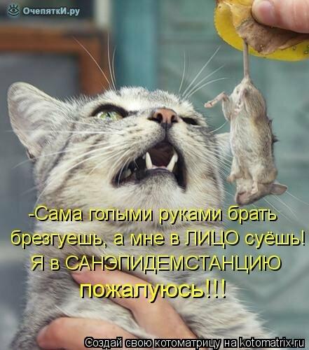 Животная котоматрица 27