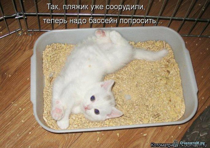 Животная котоматрица 29