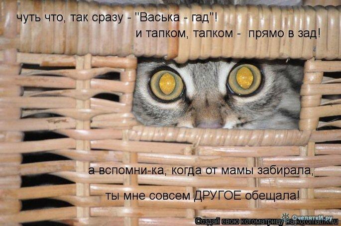 Животная котоматрица 30