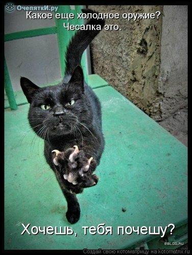 Животная котоматрица 34