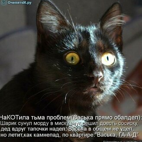 Животная котоматрица смешных фото приколов