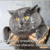 Весёлости из котоматрицы смешных фото приколов