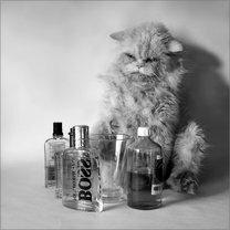 Мокрые кошки смешных фото приколов