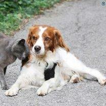 Кошки-собаки
