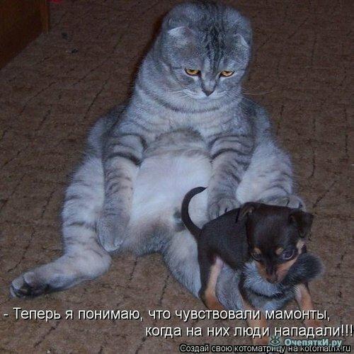 Добрая котоматрица 7