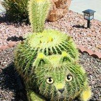 Ожившие растения смешных фото приколов