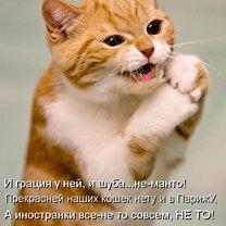Пятничная котоматрица смешных фото приколов