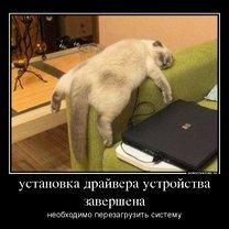 Фото приколы Нам бы ваши проблемы! (45 фото)