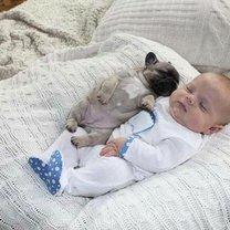 Малыш и щенята фото приколы