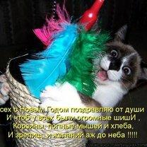 Смешные фотографии с кошками