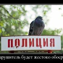 Правда жизни в демотиваторах смешных фото приколов
