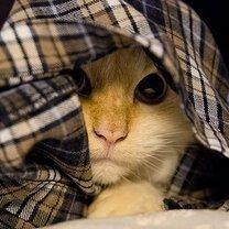Кошаки прячутся