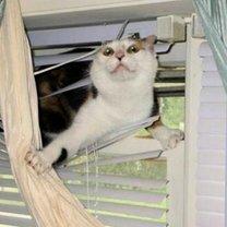 Кошки против жалюзи смешных фото приколов