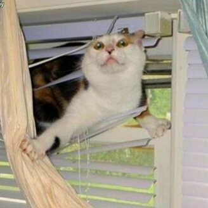 Кошки против жалюзи