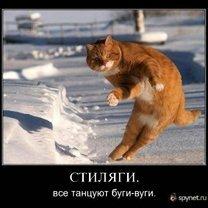 Наши  русские кошаки смешных фото приколов