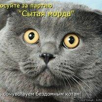 Котоматричные казусы смешных фото приколов