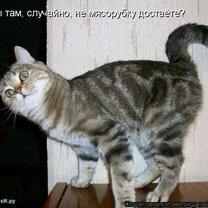 Новая котоматрица фото приколы