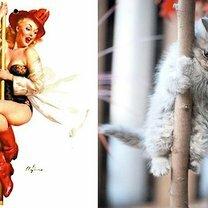 Девушки и кошки в стиле пин-ап фото приколы