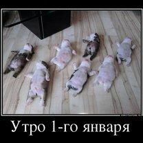 Фото приколы Демотиваторы о разном (29 фото)