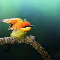 Яркие и удивительные птицы