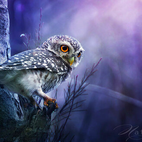 Яркие и удивительные птицы фото приколы