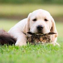 Трогательные и милые животные смешных фото приколов